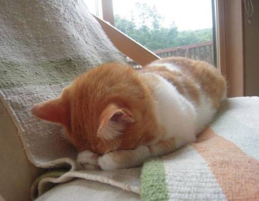 embarrassed cat