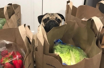 When you realize you spent your entire paycheck on food